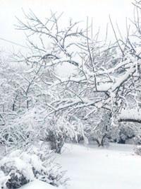 Фото - изображение для заметки Февральский снегопад в Подмосковье