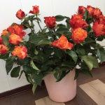 Фото - Розы - подарок маме на 8 марта