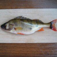Фото - Интересный Улов Рыбака – Щука, Плотва, Густера и Окунь