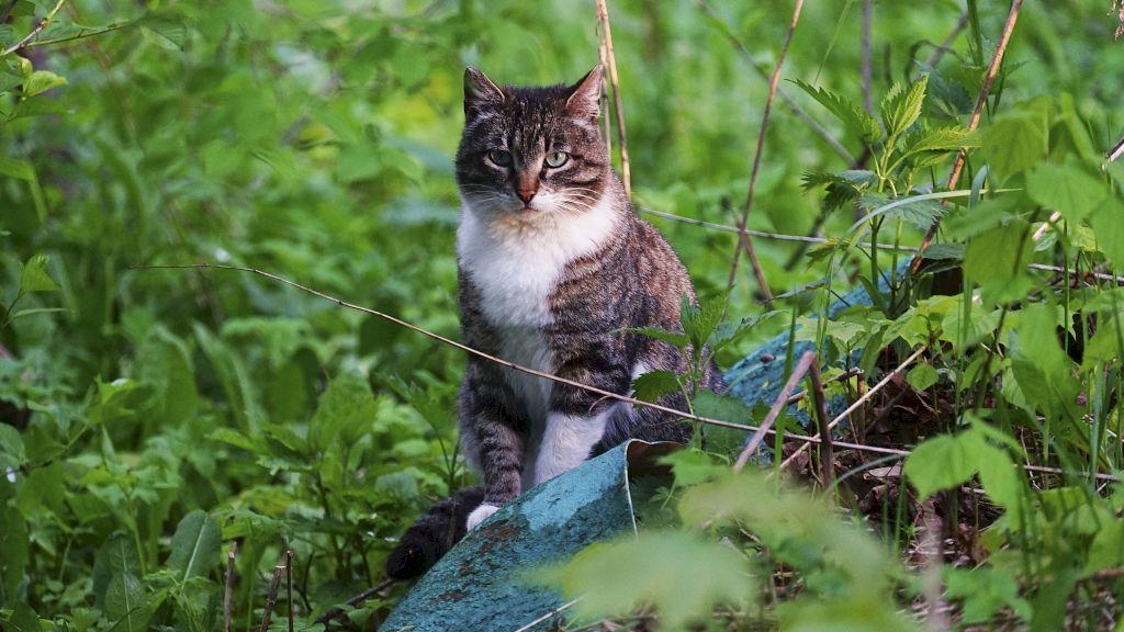 Публикация - Задумчивый дикий кот - фото кота
