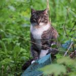 Задумчивый дикий кот - фото кота